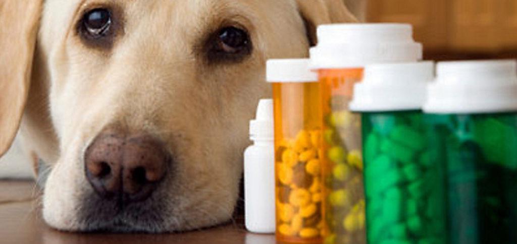 Маркировка ветеринарных препаратов